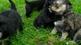 doze : mongrel puppies closeup