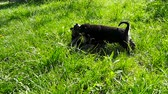 doze : mongrel puppy on grass