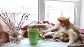Cup of coffee, books, branch of willow tree, wool blanket and red-white cat on windowsill. Cozy home concept