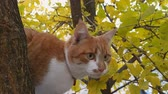 Cute white-and-red cat in a red collar on the autumn tree. Cat is staring at something