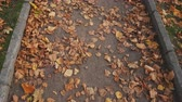 Colorful autumn leaves on city park path, lane, pathway background. Dynamic scene. Light breeze.