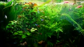 aquarium : Exotic fish swim in a beautiful aquarium, Exotic fish in aquarium, Video clip