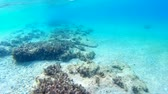 wet : Beautiful sea bottom with a flock of fish, Underwater World, Video clip Stock Footage