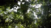 sulawesi : Ground view of tree tops in the rainforest. Tangkoko Nature Reserve in North Sulawesi, Indonesia wilderness