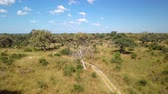 Aerial african landscape in Nambwa, Bwabwata is a national park located in north east Namibia on Caprivi Strip