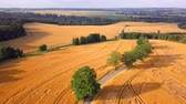 Aerial view of golden wheat field in rural countryside with country road, summer landscape, agriculture concept.