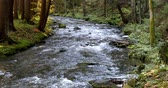 river bed : Mountain wild river Doubrava in Czech Republic. Valley in beautiful autumn fall colors. Landscape. Stock Footage