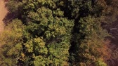 autumn forest with tree crowns view from above Stock Footage