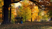 Beautiful and romantic park with colorful trees and sunlight. Autumn season natural background, falling leaves