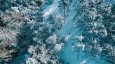 Flying over the snowy forest, top aerial view of winter landscape