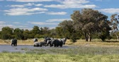 pachyderm : Majestic African Elephant on waterhole in Moremi game reserve Botswana, Africa safari wildlife