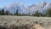 gras : De Grand Tetons boven u uit Stockvideo