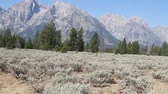 gras : Grand Tetons