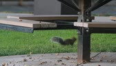 запустить : squirrel Стоковые видеозаписи