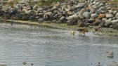 seixos : Dogs chasing sticks and running in water