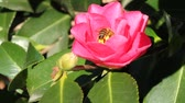 garden flowers : Bee in flower