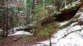 slovenya : Large fallen trunk of spruce, fir in the woods, mountain river, stream, creek with rapids in late autumn, early winter with snow, vintgar gorge, Slovenia Stok Video