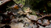houby : Young girl, unrecognizable, playing in forest and popping puffball mushrooms with stick