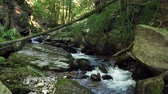 europa : Mountain river flowing over rocks and boulders in forest, Bistriski Vintgar Pohorje mountain, Slovenia, hiking and outdoor tourism landmark, ecology clean water concept, natural resources.