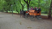 sdružení : Slovenska Bistrica, Slovenia - Sept 9 2019: People ride a horse drawn carriage in public park. Traditional horse rides are upheld by the local tourist association of Slovenska Bistrica, Slovenia Dostupné videozáznamy