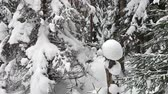 чаща : Falling snow in a winter park with snow covered trees. Winter forest walk. Стоковые видеозаписи