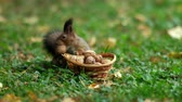 Squirrel and Some Nuts Stock Footage