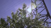 florescence : Dolly shot of the apple tree blossoming. Stock Footage