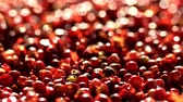 перчинка : Pink pepper peas. Close up.The movement in a shot.