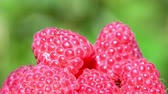 soft fruits : Raspberries super close up 4K stock footage. Raspberries in macro close up with a sliding camera move.Movement in a circle.