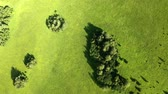 baldachýn : Aerial footage of beautiful fir trees. Green hills and blue sky at sunset.