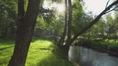 derű : A relaxing shot of a stream running along the forest landscape with sun rays beaming through the trees