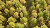 yaprak döken : Golden autumn drone view of forest landscape with yellow trees from above Stok Video