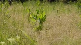 waterplant : Meadow grass rustles in the wind Stock Footage