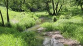 river : Stream among green grass