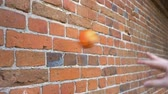 crashed : a small pumpkin is smashed against the brick wall