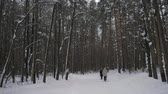 yürüteç : Rear view of an two elderly woman who is engaged in Nordic walking on a snowy path in the woods. The modern form sports exercises outdoors. 4K