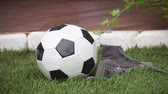Landscape design. Soccer ball, football boots Стоковые видеозаписи