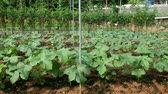 plant fertilizer : Vegetables Growing In A Farm