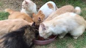 gatinho : Top view of kittens together eat from a plate on a background of green grass.