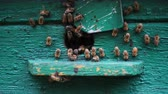 grup : bees flying in and out beehive close up view