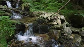 beautiful mountain creek flows over boulders with moss at the shady forest Stok Video