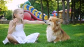 girl and her corgi fluffy dog eating ice cream on a grass at the park Stok Video