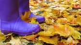 esős : Close up photo of child legs in rubber shoes on a yellow maple leaves Stock mozgókép