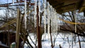 water curtain : Spring is coming. Icicles on a roof of private building Stock Footage