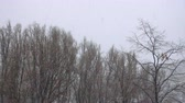 visibilité : hard snow falling on a trees trunks at the park