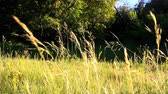 verdejante : grass in a meadow