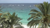 watercraft : large group of sailboats and palm trees