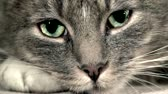 perception : Cats eyes, pupils opening and closing