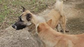 sincero : Dog getting rid off fleas from another dog