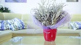 smell : Vase of lavender flower on the table in living room, with sofa in background. Lavender as room decoration and fragrance.  Lavandula (common name Lavender) is a genus of 39 species of flowering plants in the mint family, Lamiaceae. Cultivated extensively i Stock Footage